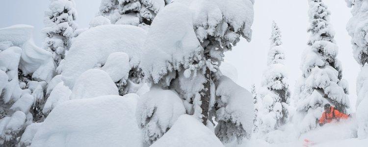 Goed nieuws: La Nina, de Lady of Winter komt eraan!-1560448943
