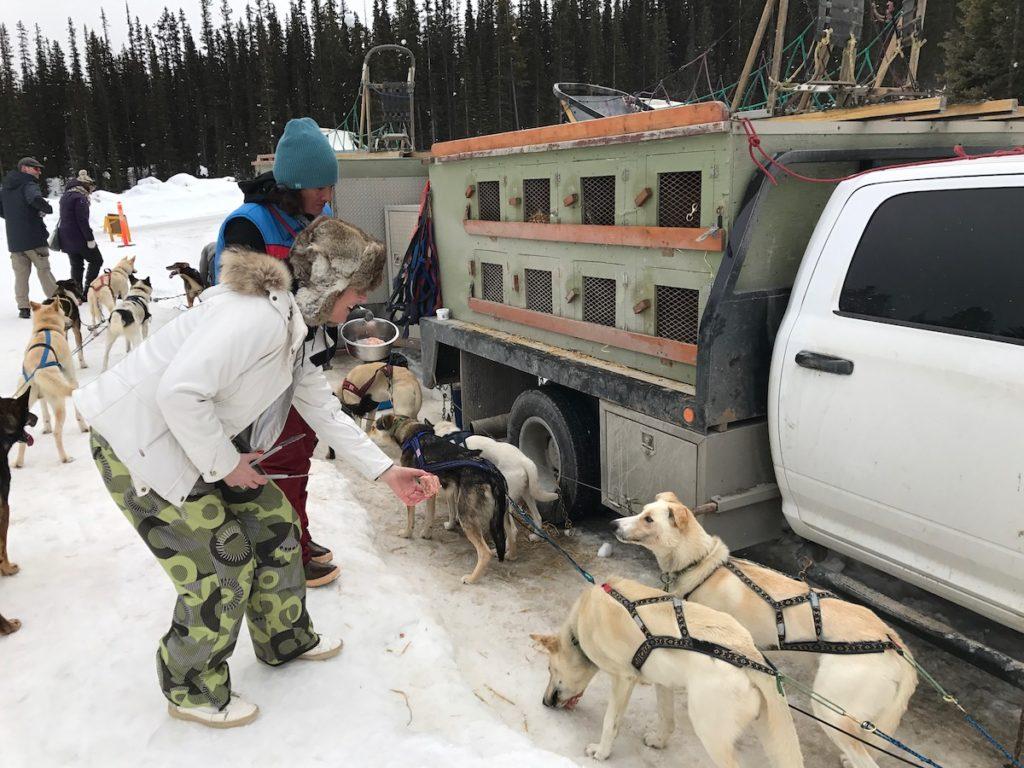 Combineer je vakantie in Lake Louise of Banff Alberta met deze populaire hondensledetocht van King Mik Dog Sled Tours
