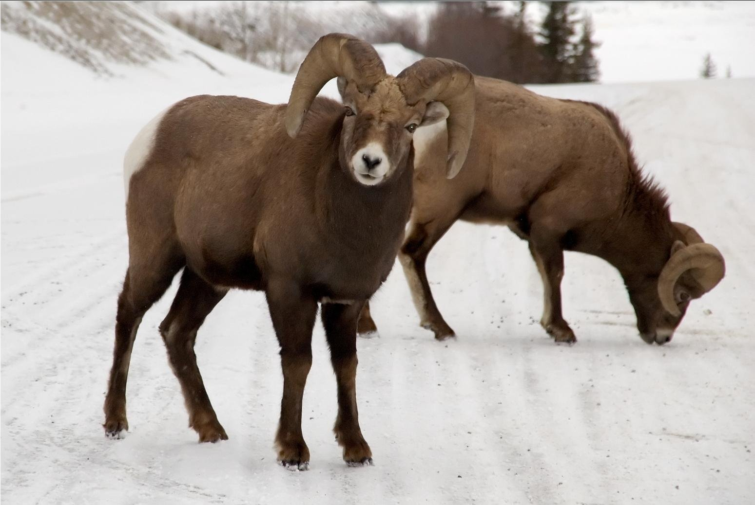 Wildflife in Jasper