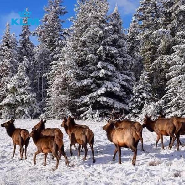 sneeuwzekerdeal wildlife & ski 1x1.jpg