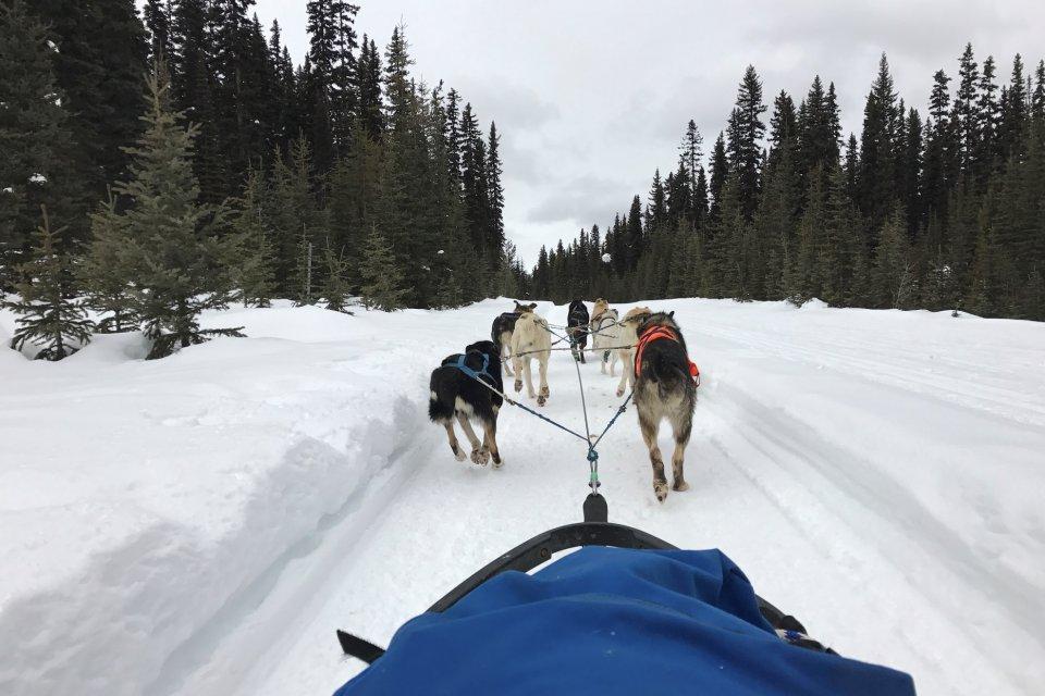 Hondensledetocht  in Lake Louise