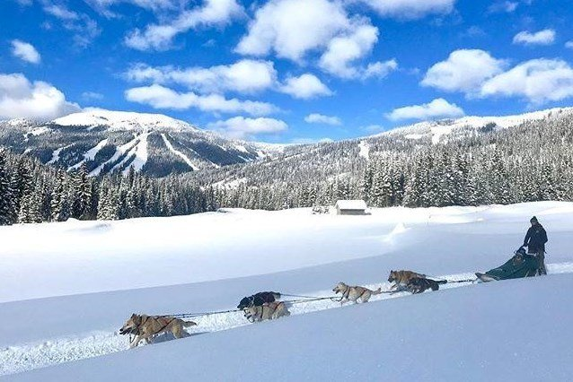 Sun Peaks Dogsled