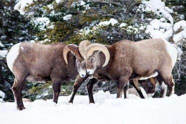 Winter Wildlife tour