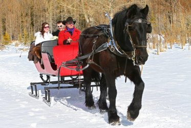 Sleigh Rides Banff
