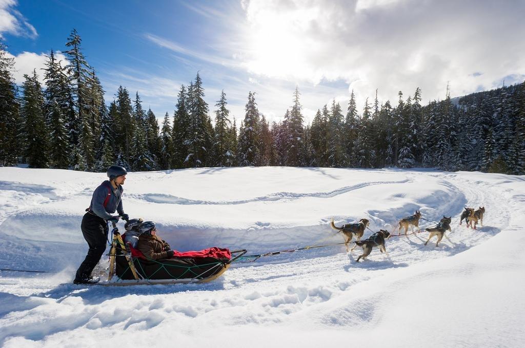 Hondenslede tocht Whistler