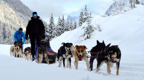 Kinderen, honden, sneeuw en slee .... de perfecte activiteit in Canada  voor kinderen op je wintersport vakantie in Jasper.