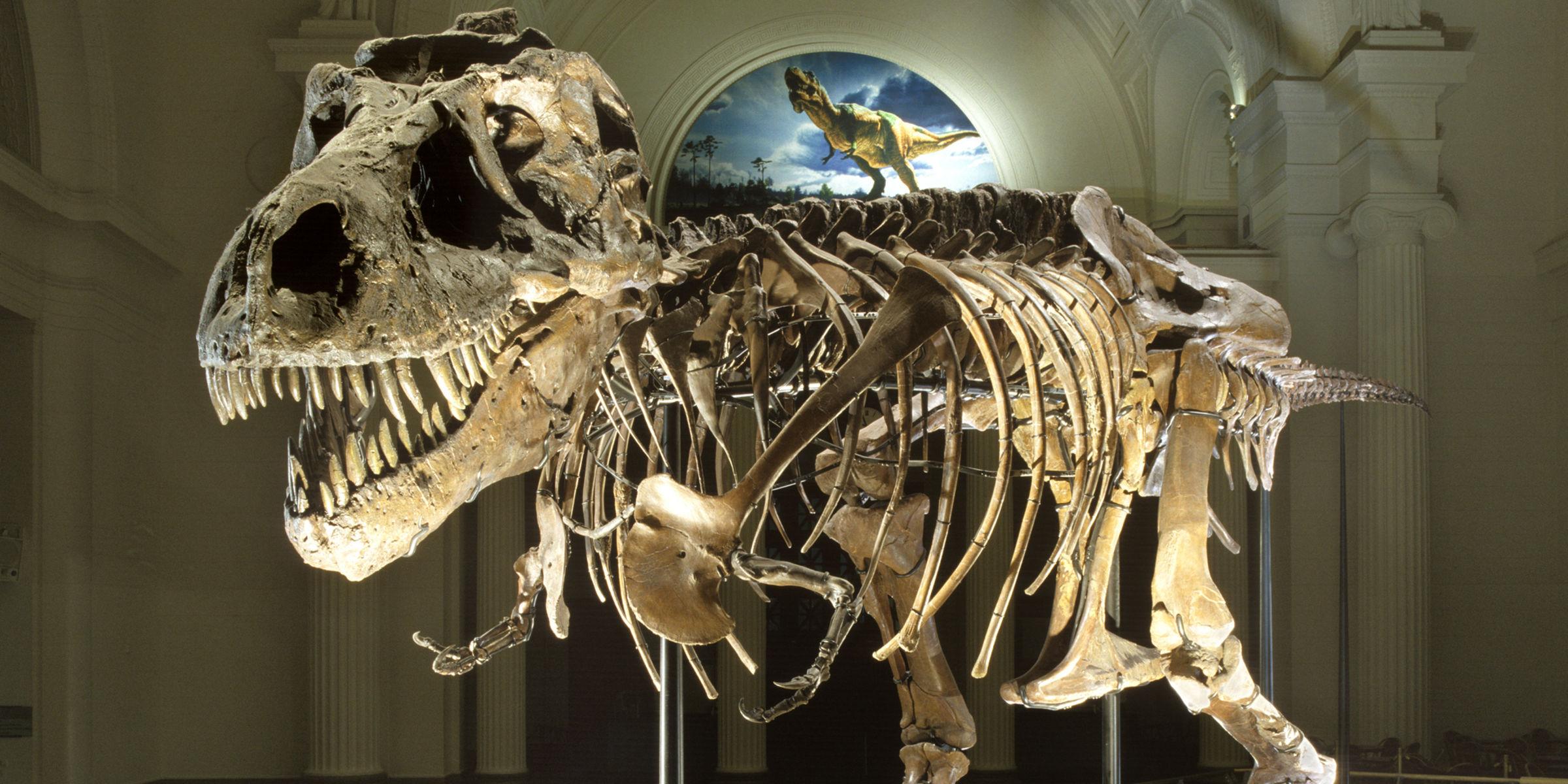 In Chicago heb je heel veel musea zoals  The Art Institute of Chicago en The Field Museum. Bezoek ook T-rex skelet Sue.