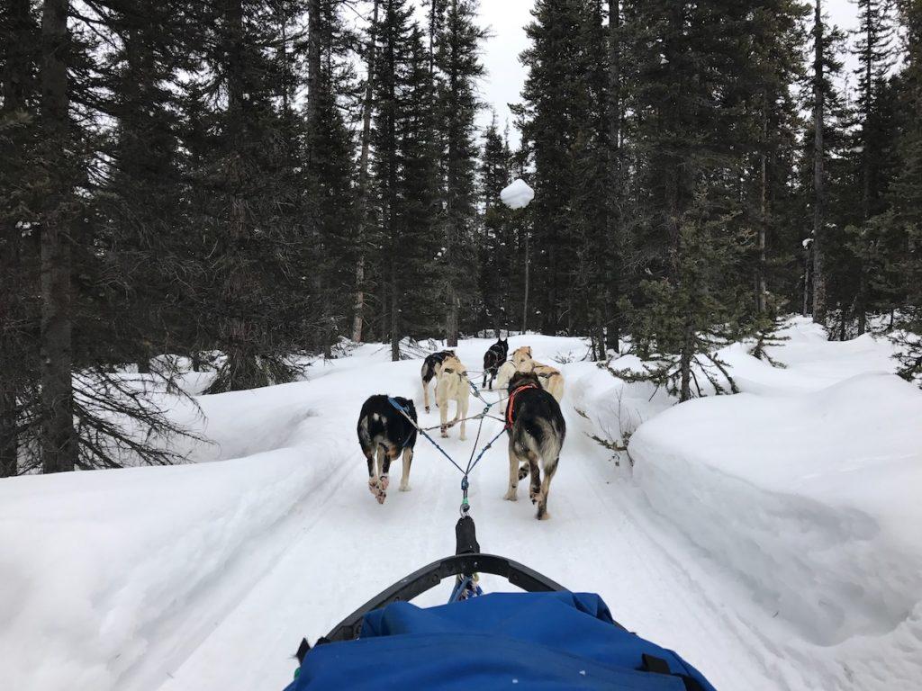 Regel je hondensledetocht van King Mik in Lake Louise Alberta van tevoren zodat je verzekerd bent van een plek