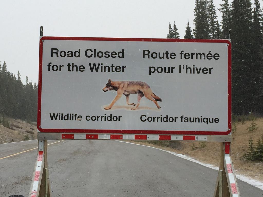 Wees goed voorbereid als je met je huur auto rijdt op de Canadese en Amerikaanse wegen op weg naar wintersportbestemming